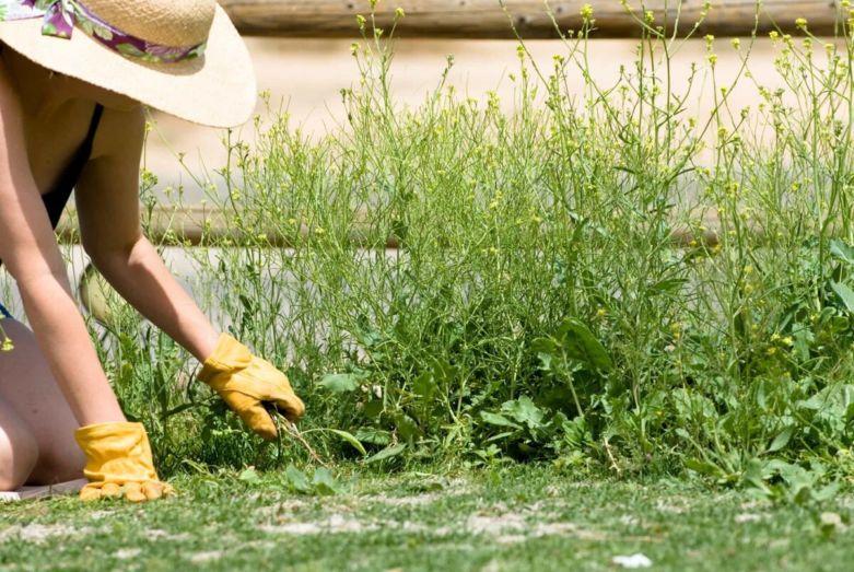 как избавиться от сорняков на даче