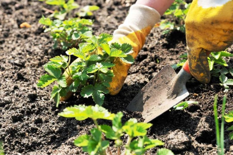 средства от сорняков в огороде