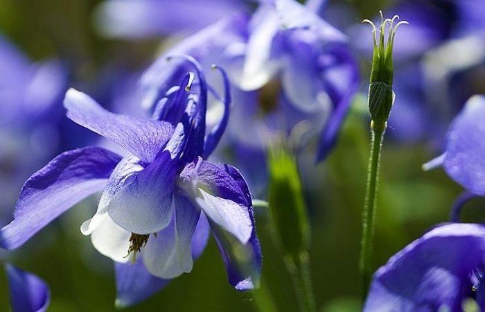 водозабор цветы