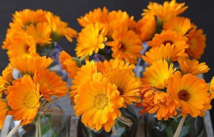 цветы календула