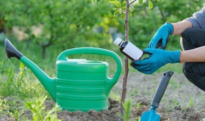 как правильно подкармливать растения