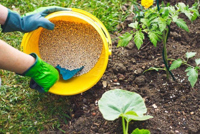 чем удобрить огород