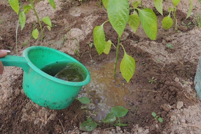 чем удобрять растения