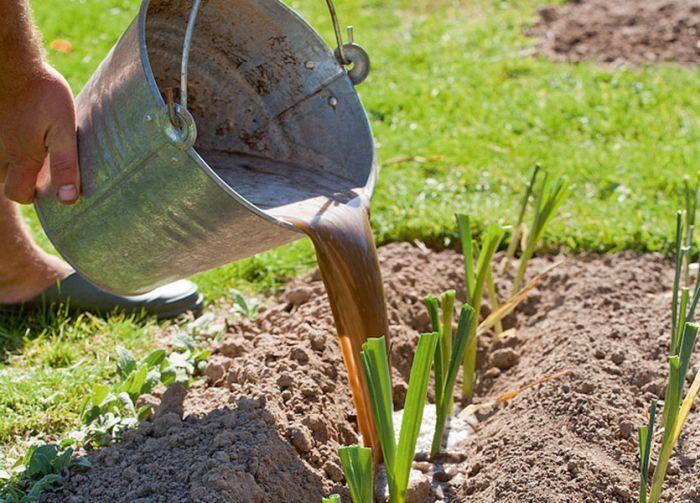 когда лучше удобрять землю