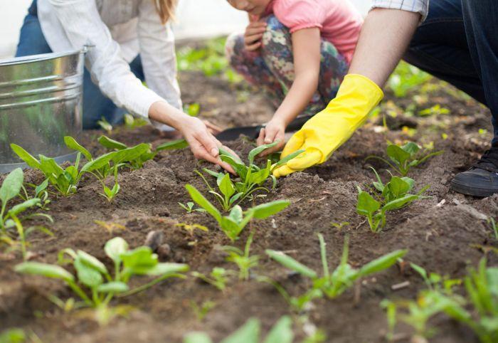 какие семена можно сеять