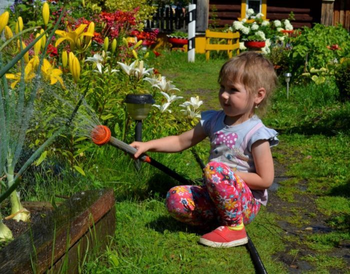 как поливать лилии