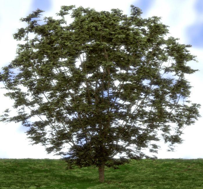 фундук куст или дерево