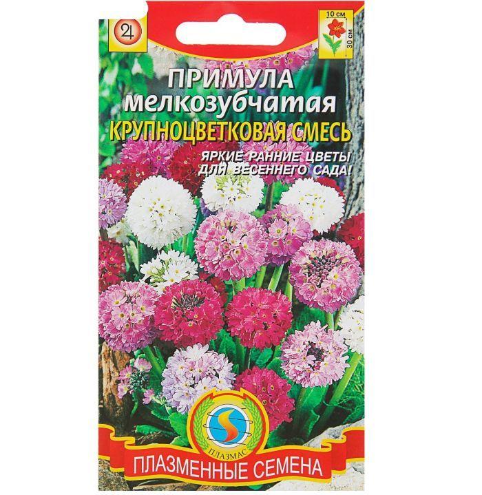 семена садовой примулы