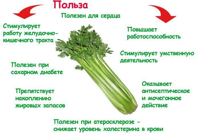 сельдерей как выращивать в огороде