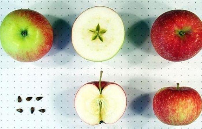 яблоки мельба фото и описание сорта