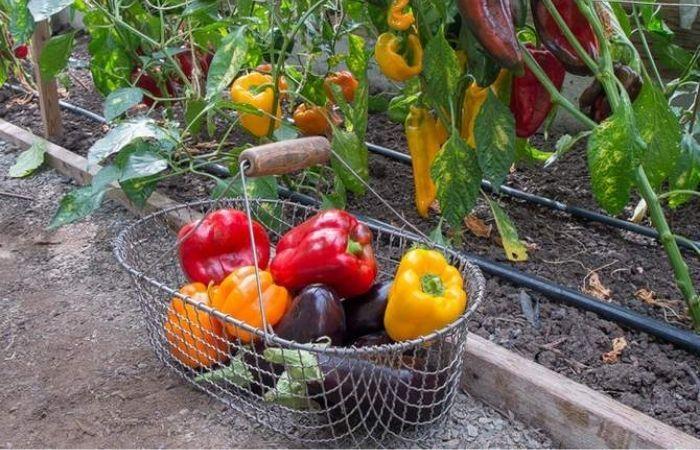 дрожжи для растений как удобрение