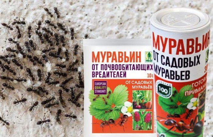 борная кислота от муравьев в огороде