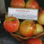 болотовские яблоки фото