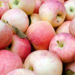 болотовское яблоко