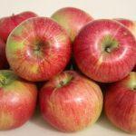 уэлси сорт яблок описание фото