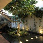 растения для оранжереи