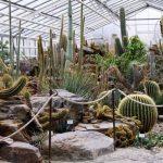 зиний сад с кактусами