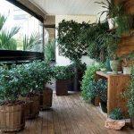 варианты зимнего сада в доме