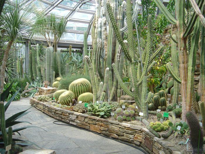 пустынный сад в доме