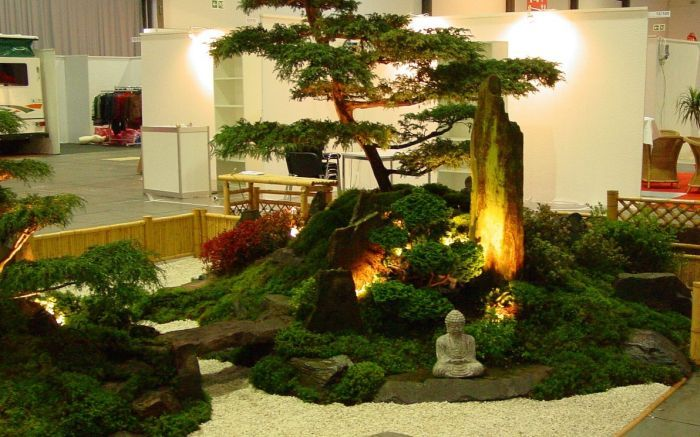 зимний сад растения