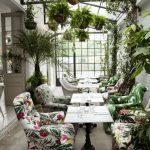 домашний зимний сад