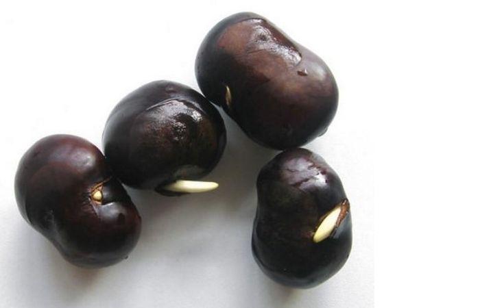 каштановое дерево фото