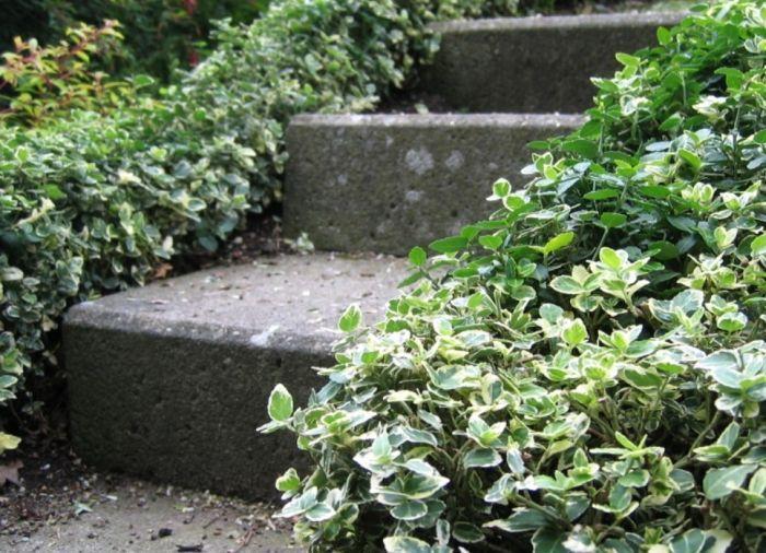 бересклет вм оформлении лестниц