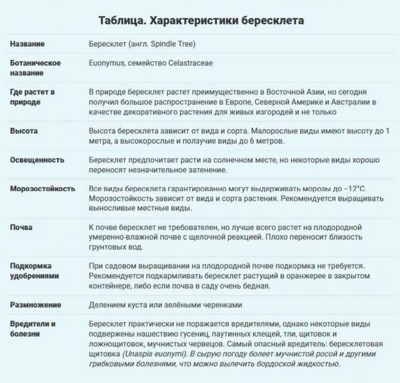бересклет описание и харктеристики