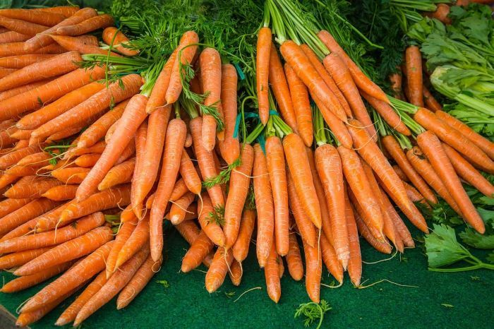 морковь для хранения в домашних условиях