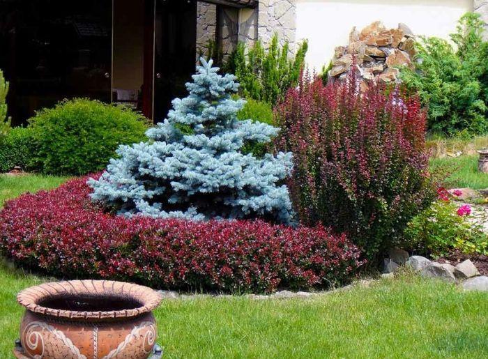 барбарис уход и выращивание в саду