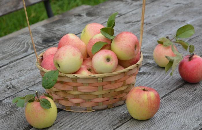 сбор яблок для заготовок на зиму
