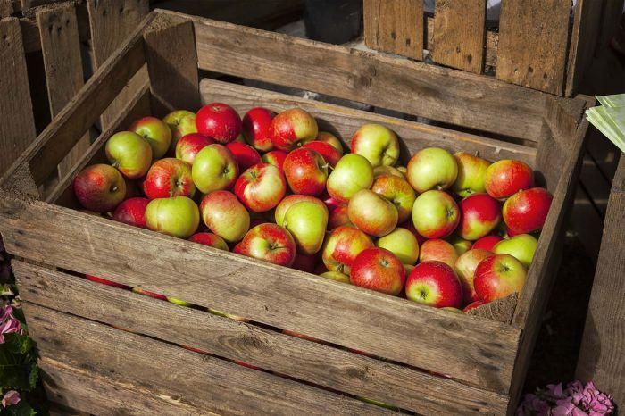 где хранить яблоки в домашних условиях