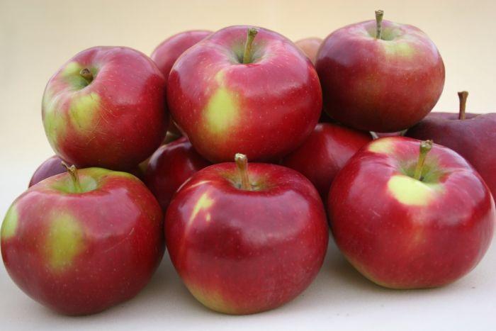 сорта яблок для домшнего хранения