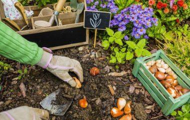 какие многолетние цветы можно посадить осенью на даче