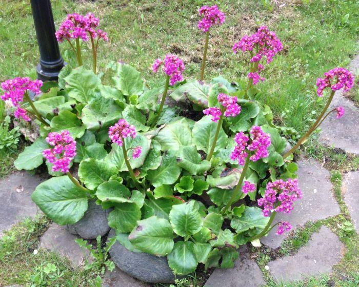 какие цветы можно посадить под зиму