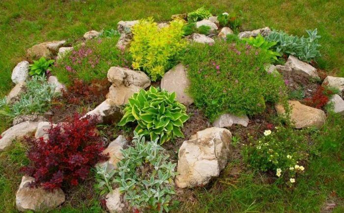 альпинарий с цветущими растениями