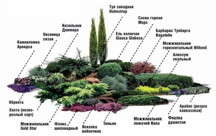 схема высадки растений альпинарий