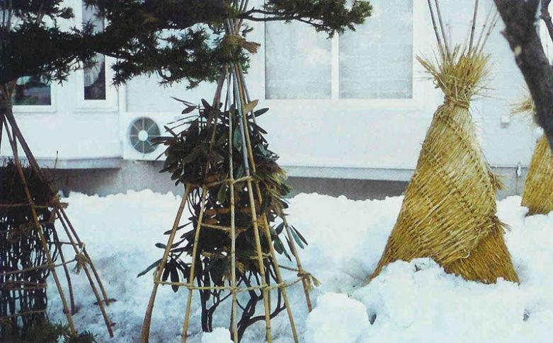 Что укрывать на зиму