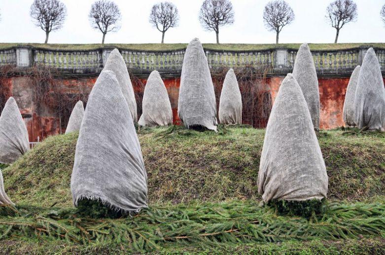 Для чего оборачивают деревья на зиму