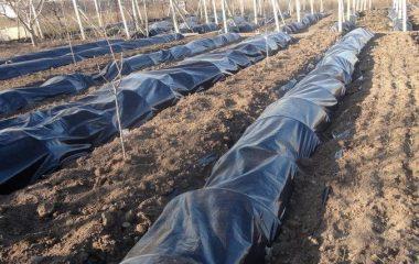 • как накрыть виноград на зиму в подмосковье