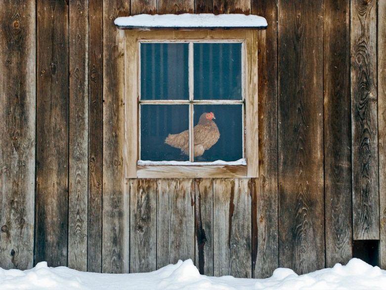 Окно в курятнике